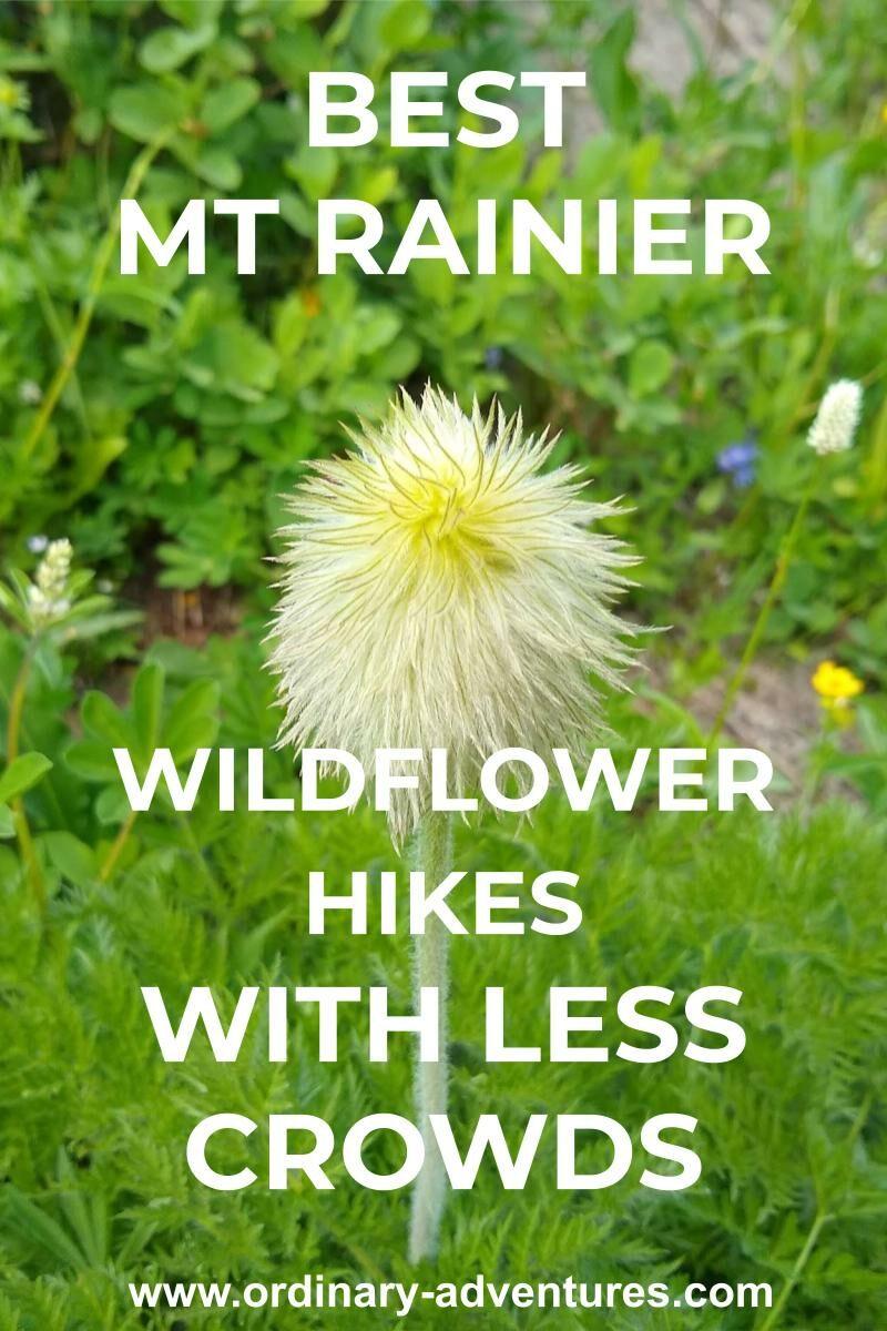 A small white flower in Mt. Rainier
