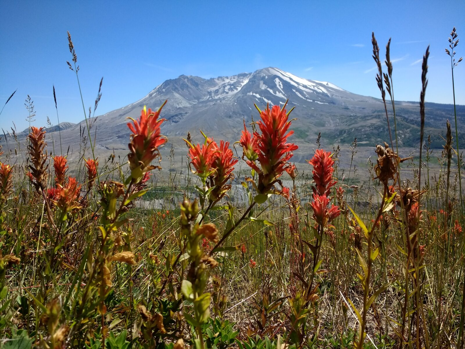 The crater of Mt St Helens is visible across the valley and there are bright red wildflowers in the foreground