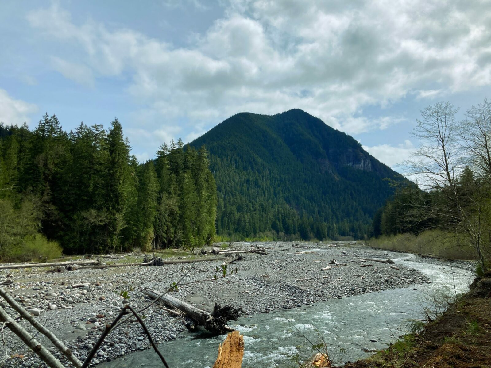 The Carbon River is milky colored and flowing through a wide rocky channel. There is a forested mountain in the background and forest on both sides of the river. It's a partly cloudy day.