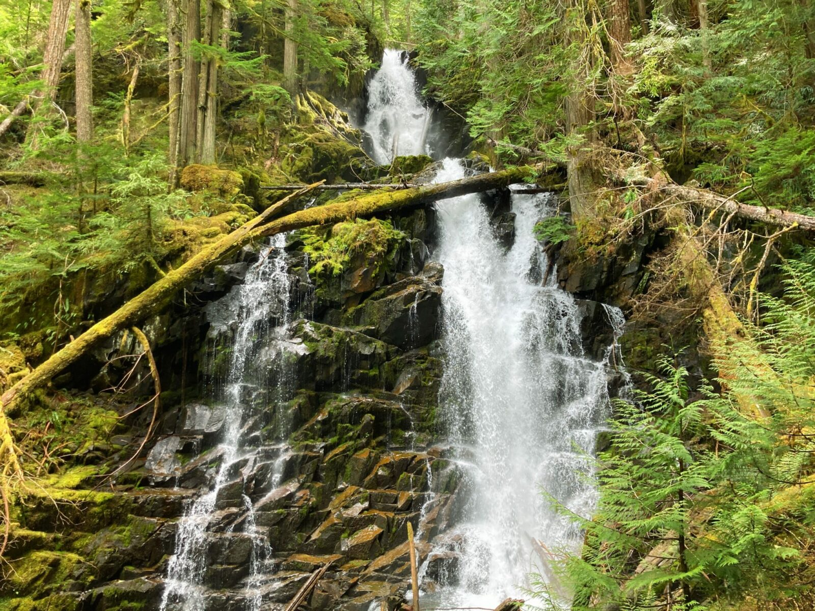 A waterfall tumbles down through an evergreen forest full of moss and ferns. About halfway down, the waterfall splits into two falls.