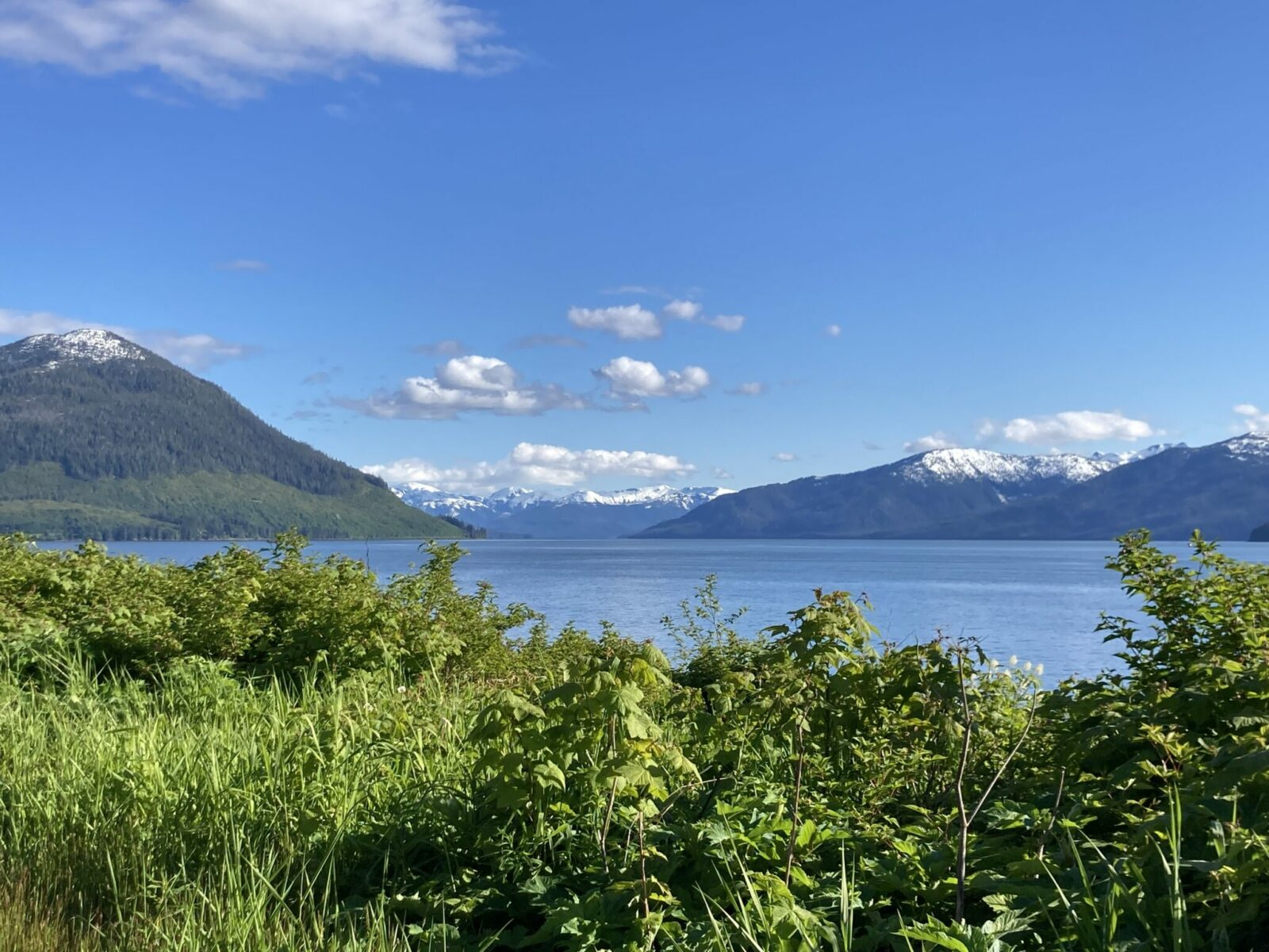 Green undergrowth in the foreground and fjord in the background. There is still some snow on the forested mountains on a sunny day