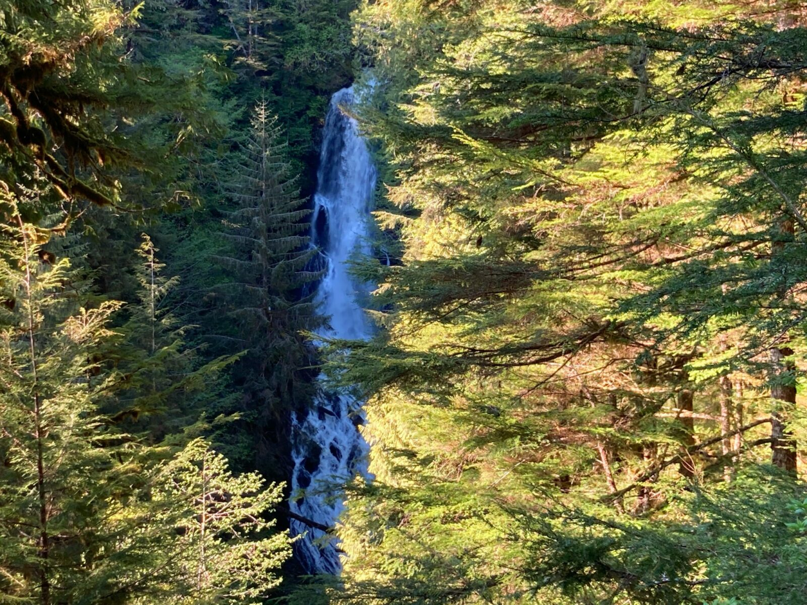 A waterfall falls straight down hundreds of feet through a forest