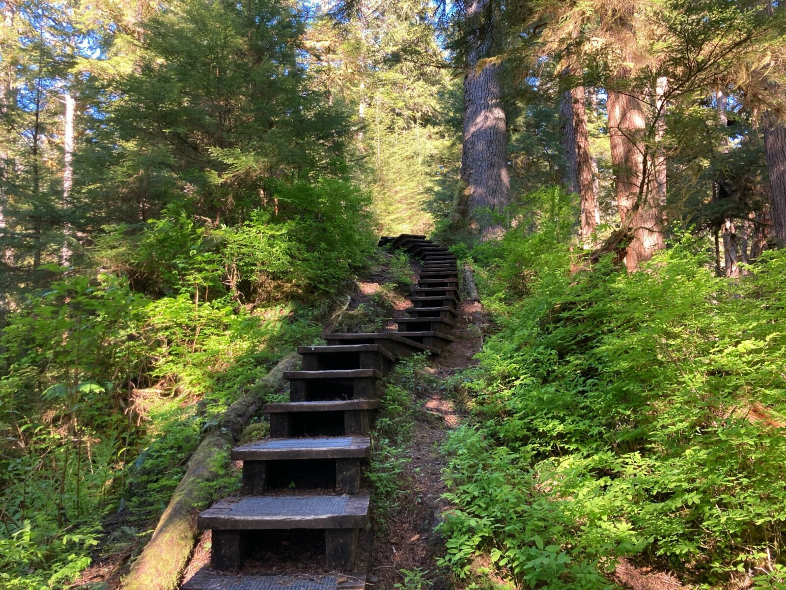 A series of wooden steps leads through the forest on a trail near Wrangell Alaska
