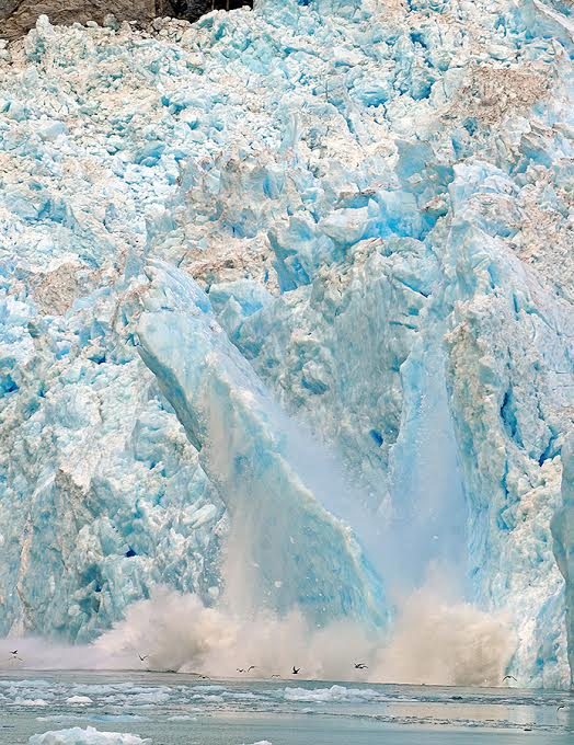 The face of LeConte Glacier. In the photo we mostly see blue and white ice in the process of falling into the ocean below with big spray and birds flying through it