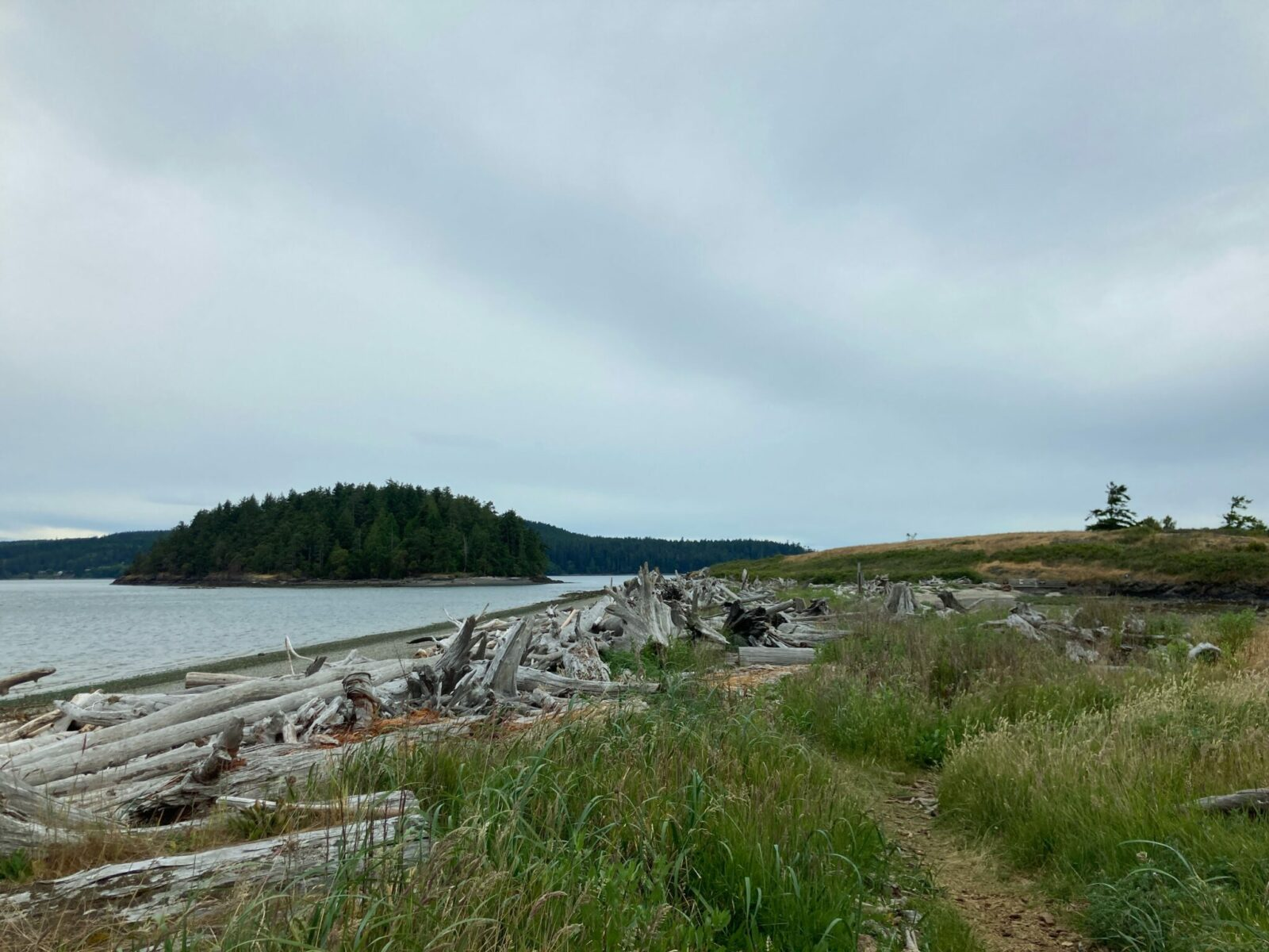 The beach at Kukutali Preserve. There is driftwood and grasses along the side of a trail. In the distance you can see an island in the sea