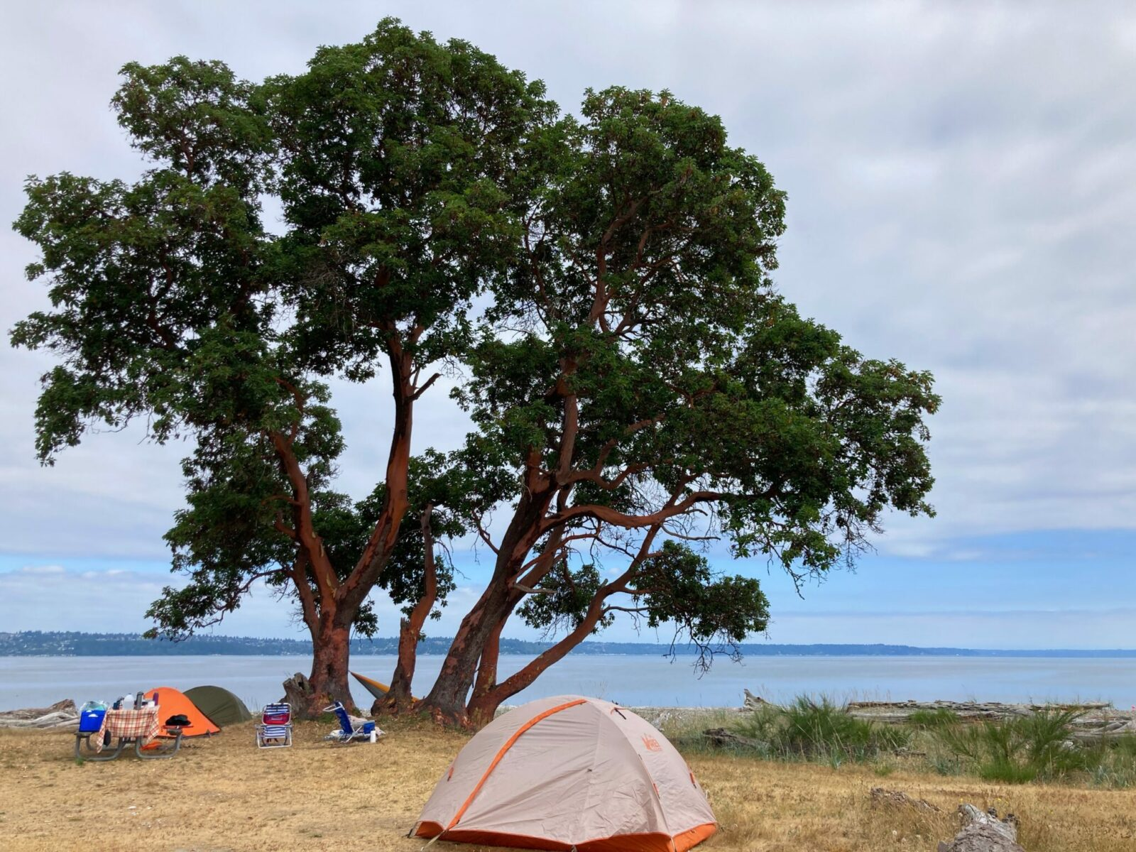 A campsite at Blake Island State Park. There are there tents in dry grass under a large madrona tree. The campsite is at the beach and the water and distant forested land are in the background