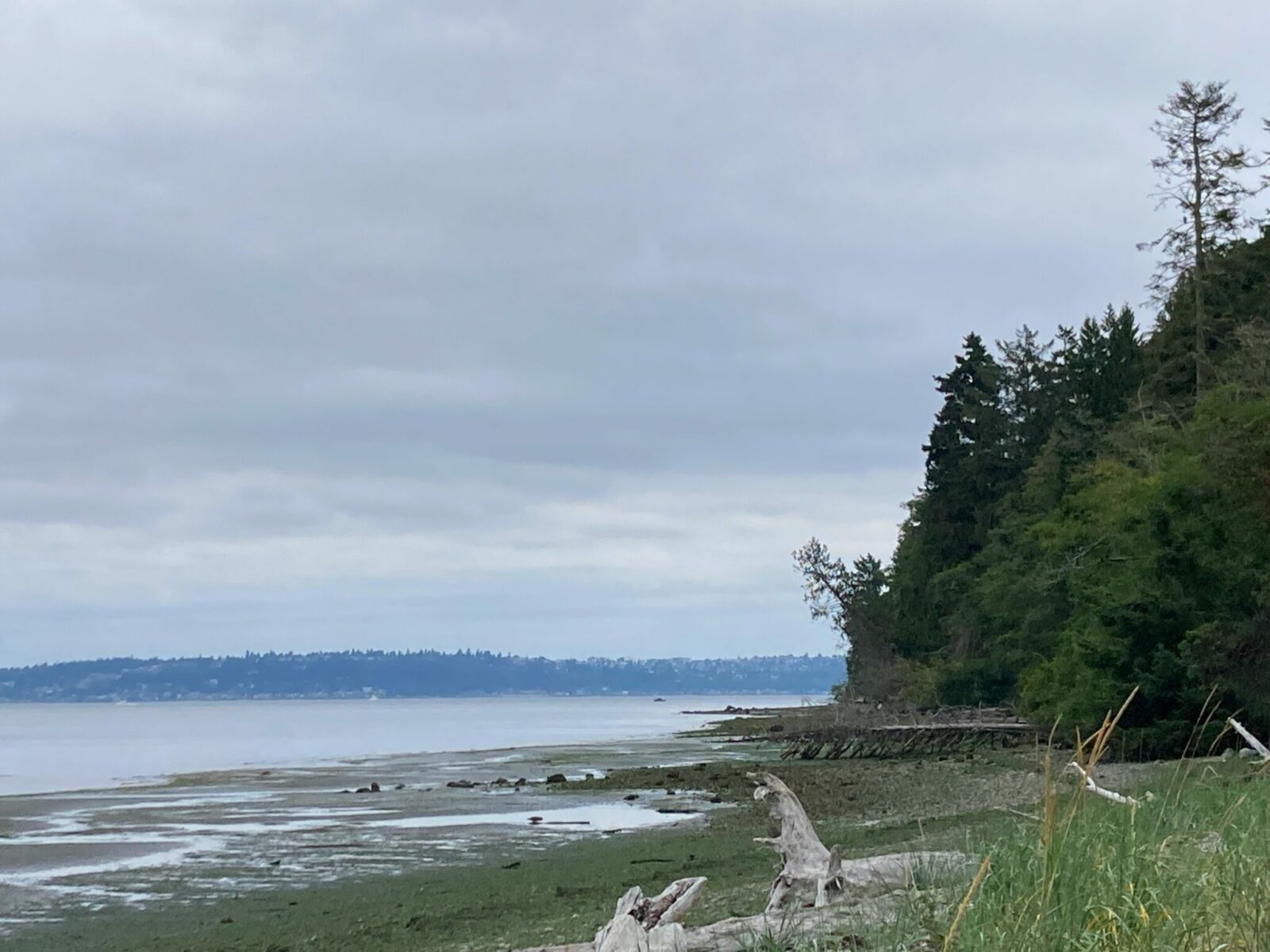 The remote beach on the west side of Blake Island State Park. There are forests up to the edge of the beach and seaweed and driftwood on a rocky beach at low tide. Gray water and distant land with trees and buildings are in the background