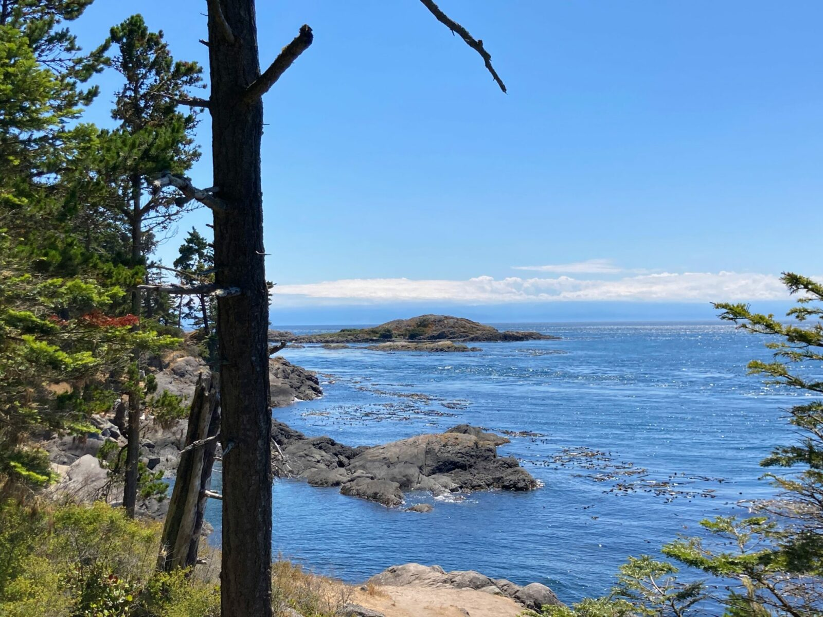 A favorite thing to do on Lopez Island is to hike to the edge of shark reef. There are trees in the foreground and brown and gray rocks in the water with lots of kelp. There are a few clouds in the distance