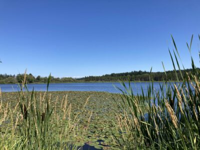 A blue lake with lily pads and cattails in the foreground surrounded by forest on a sunny day.