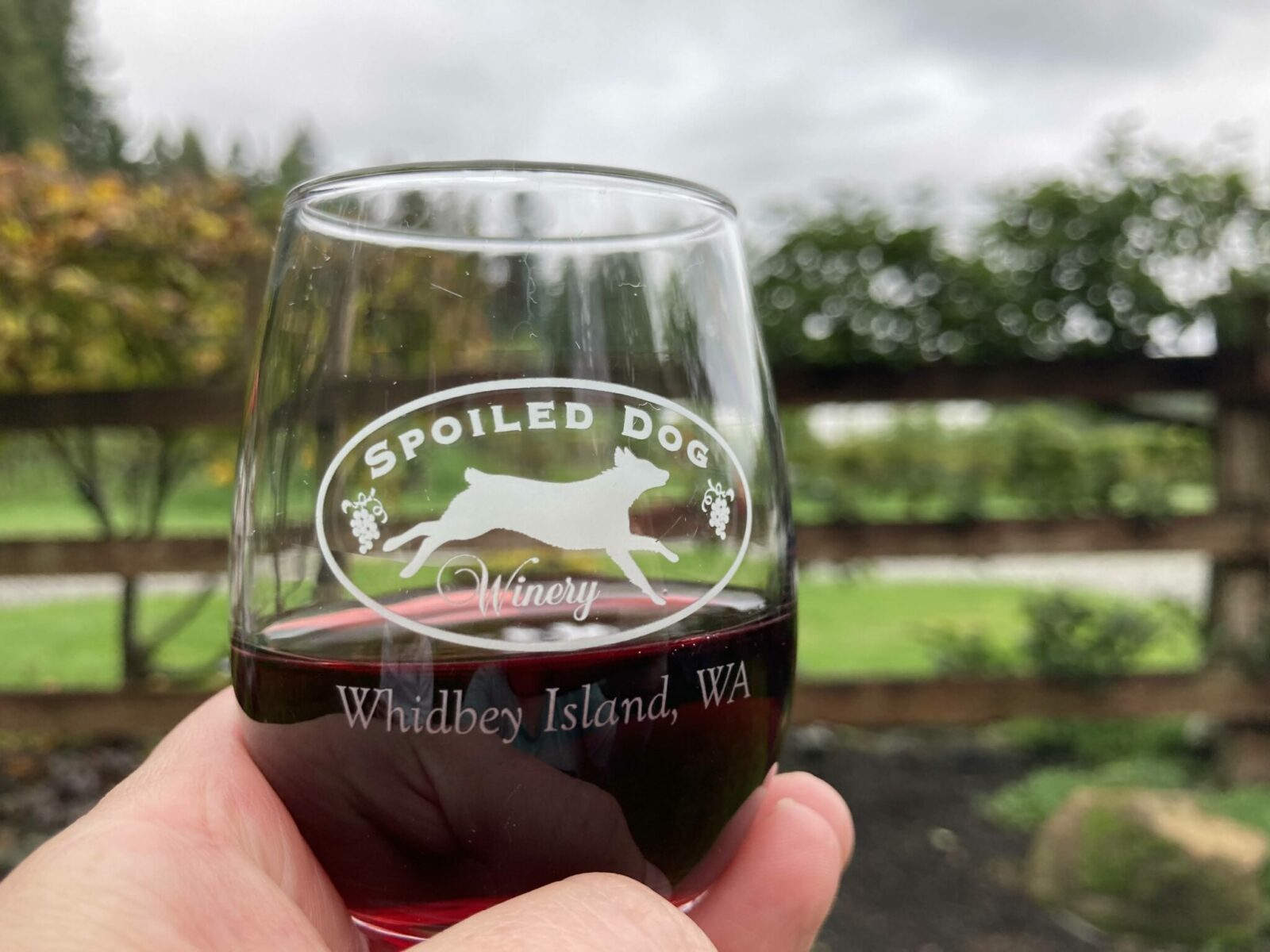 """A wine glass with a picture of a dog that says """"spoiled dog winery whidbey island wa"""". A person is holding the glass about half full of red wine in front of a blurry wooden fence and vineyard in the background"""