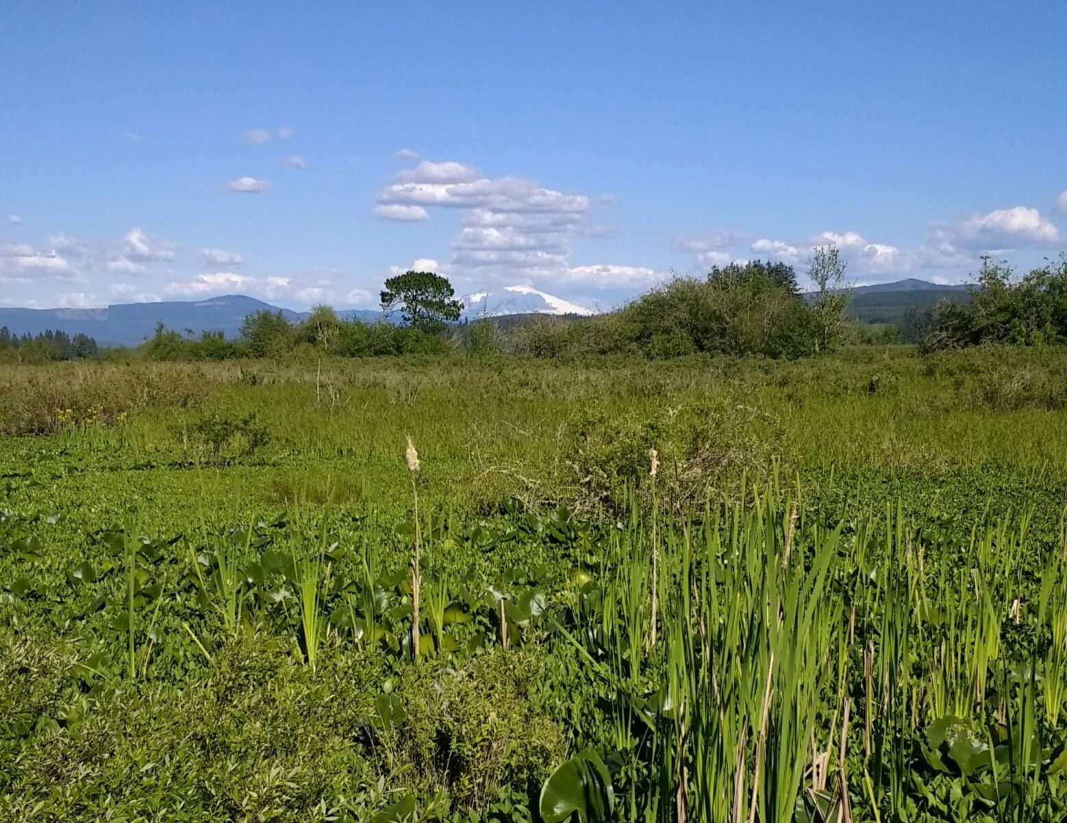 A view of a distant mountain across a wetland on a day trip to Mt st helens