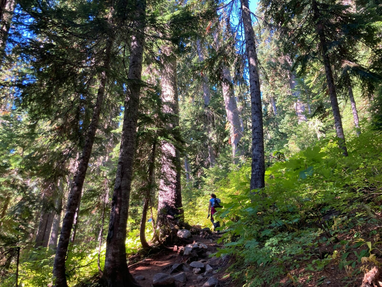 A dirt trail with some rocks in the forest on a sunny day. A hiker is walking ahead on the trail