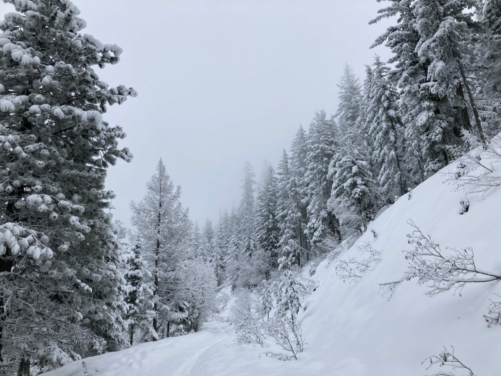 A closed forest service road covered in snow with snowshoe tracks. There is forest with snow covered trees next to the trail