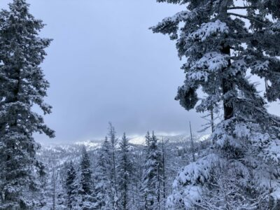 Fresh snow in the forest on Wenatchee crest. It's overcast but the mountains in the distance are trying to poke out from the clouds