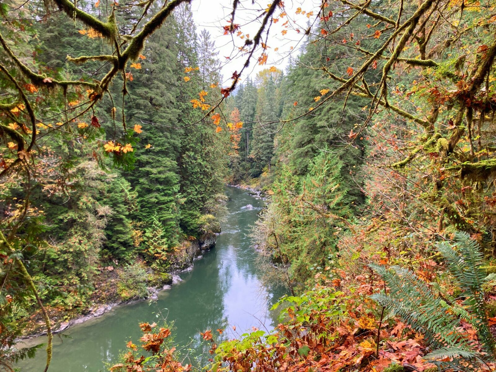 A turquoise river going through an evergreen forest seen from above. There are a few fall leaves from the deciduous trees that have fallen on the ferns near the river.