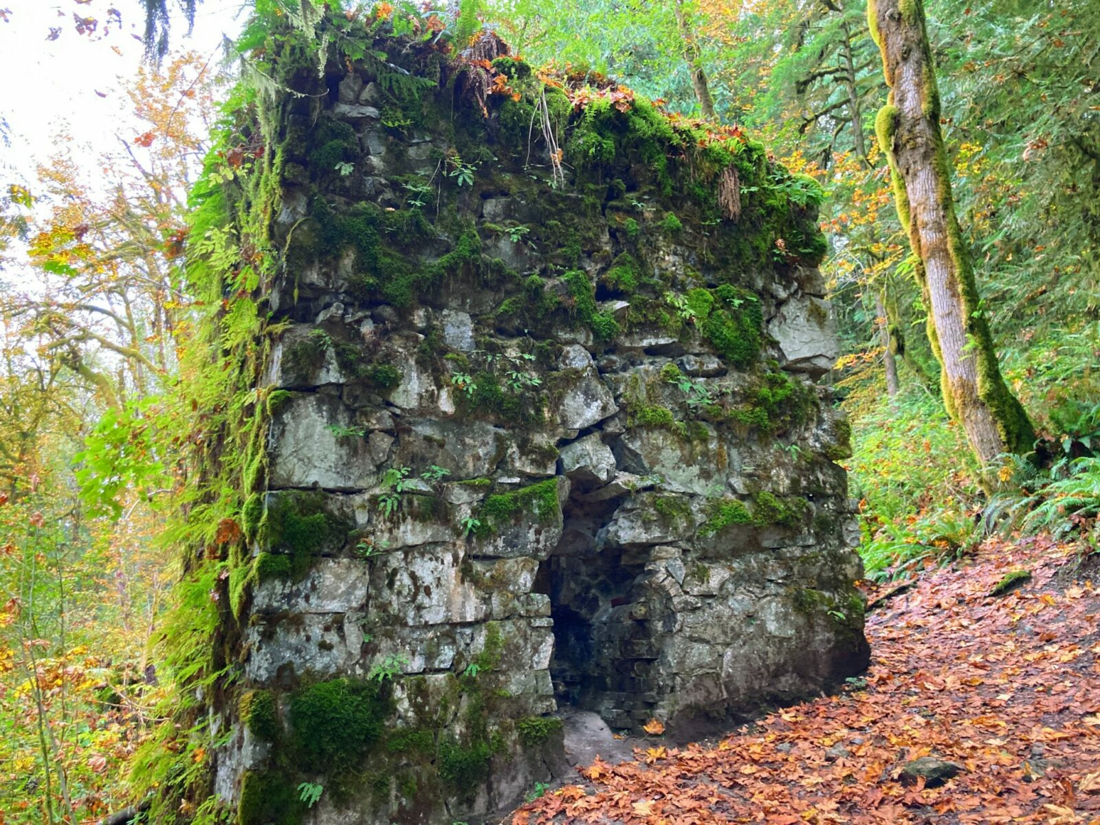 The lime kiln next to the lime kiln trail. It's a stone structure with moss and ferns on it and an open hole where the fire was built. it is in a forest and has fall leaves on the forest floor