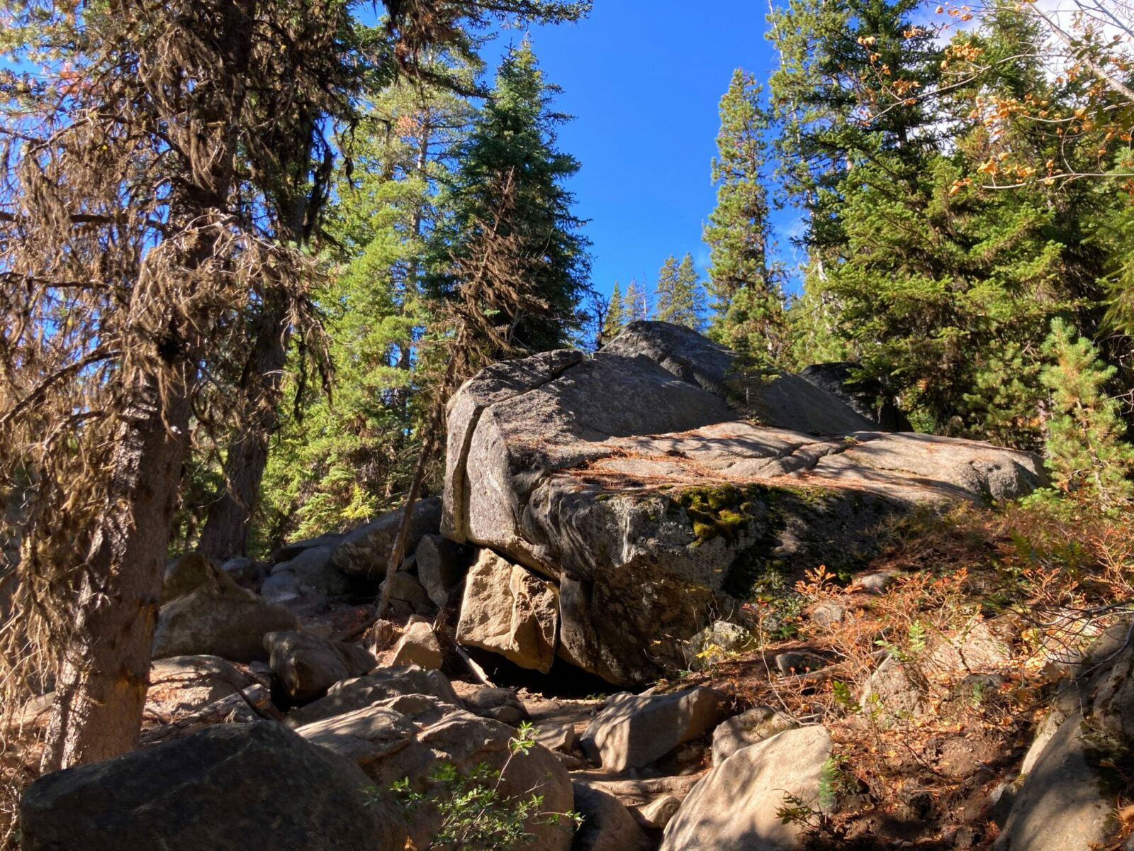 Boulders in a forest on a sunny day