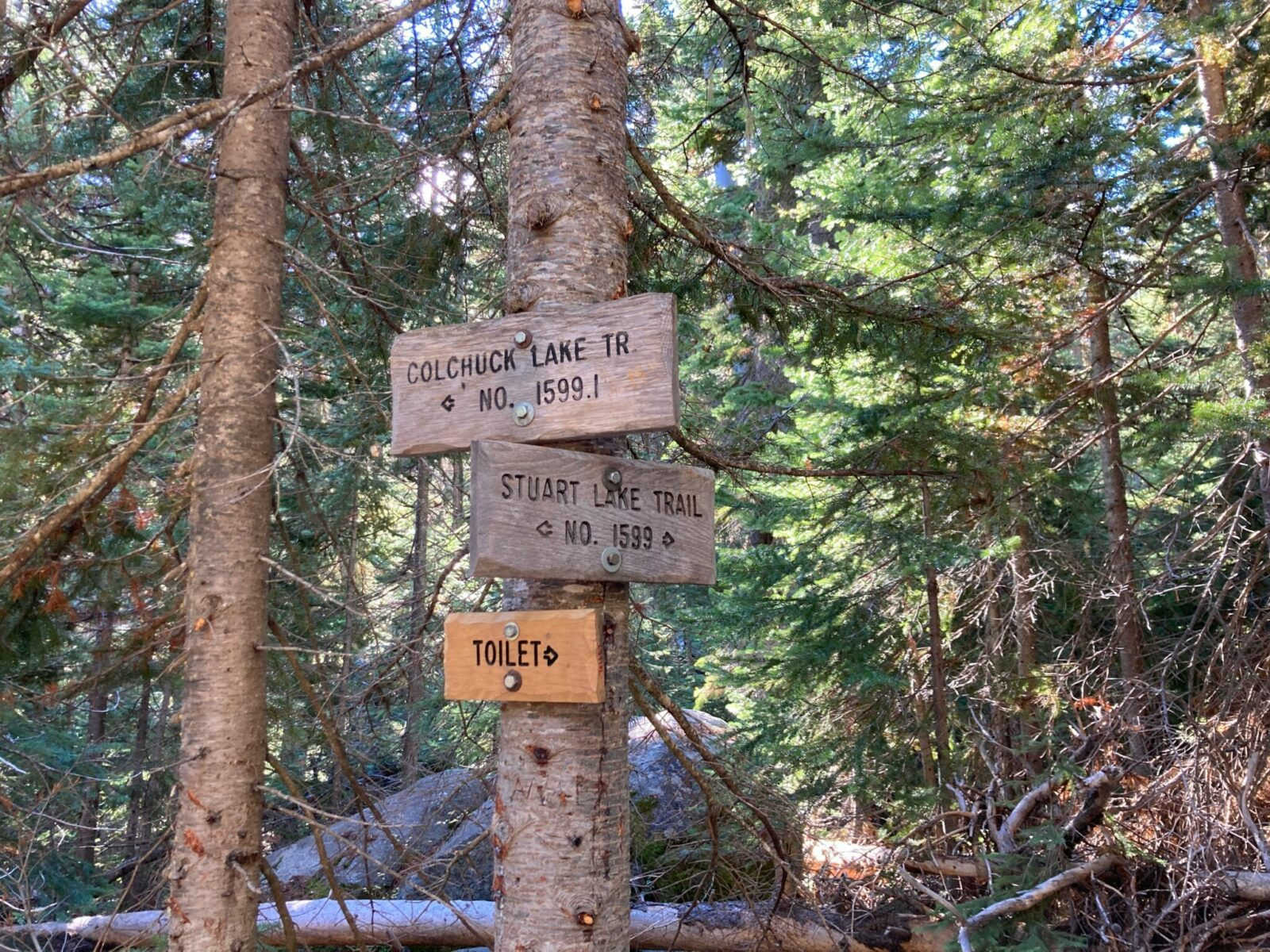 """A tree in the forest with three wooden signs attached to it. One says """"Colchuck Lake Trail"""" with an arrow to the left, one says """"Stuart Lake Trail"""" with an arrow going right and one going left, and one says """"toilet"""" with an arrow to the right"""